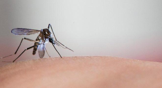 Atenção, passam de mil casos positivos de dengue no município