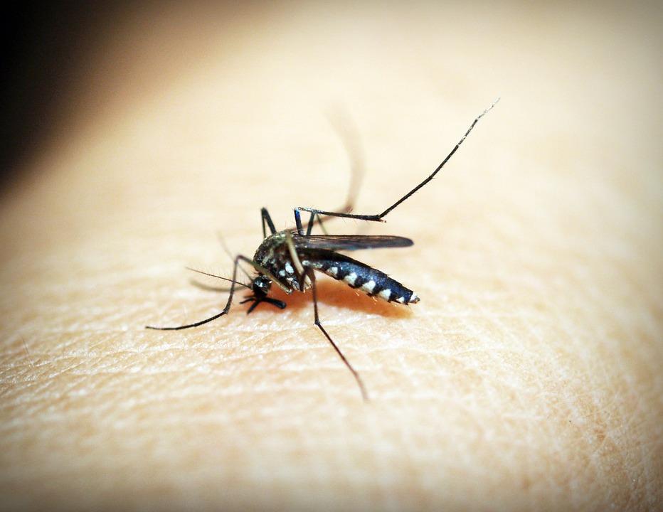 Mirandópolis contabiliza mais de 1,7 mil casos de dengue