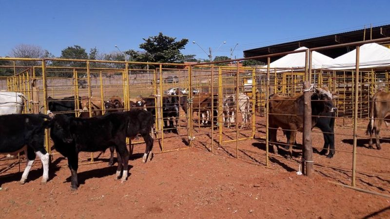 Leilão de gado de São Cristóvão acontece neste domingo (21)