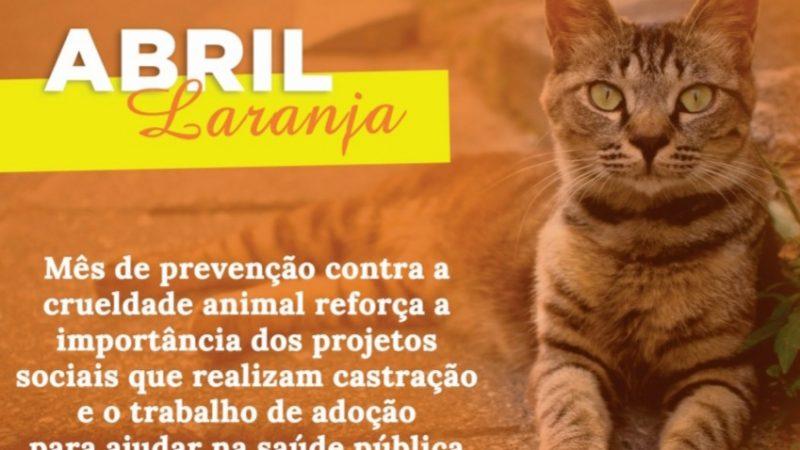 Abril Laranja: mês de prevenção contra a crueldade animal