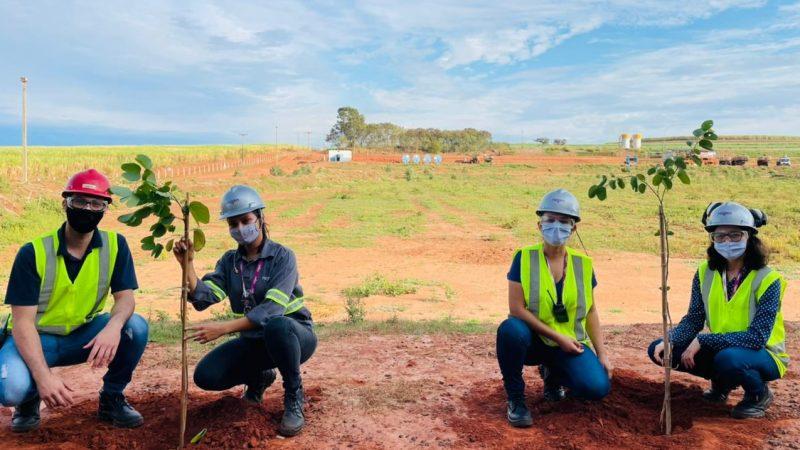 Programa VOAR: Raízen Mirandópolis realiza plantio de mudas de árvores